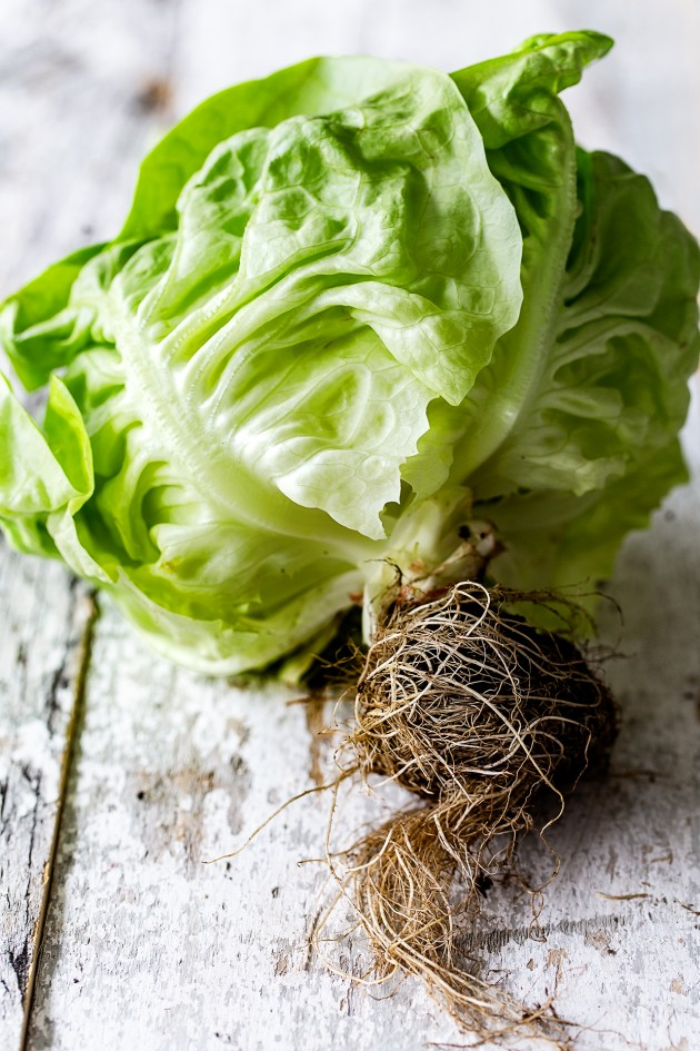 Butter Leaf Lettuce | Bakers Royale