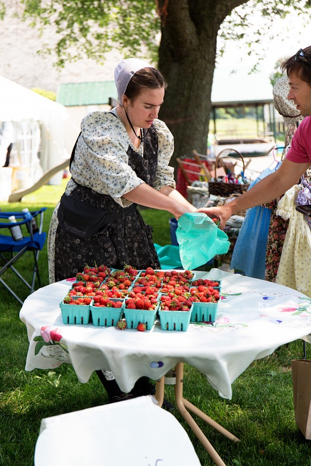 Mennonite Strawberry Sale | Bakers Royale